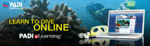 Open Water Static Banner