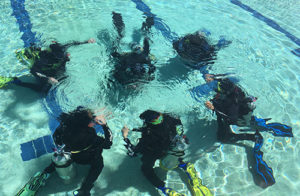 divers in swimming pool